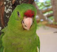 A beautiful Colombian parrot