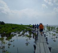 Escape Adventures bikers visit the different generations of mangrove planting in Cambodia