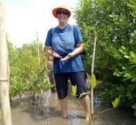 Mopping up CO2 cleaning the oceans and providing a habitat for the fish... one mangrove at a time