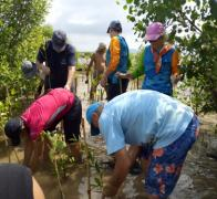 On every one of our Cambodian cycle tours we plant 10 mangroves for every biker and every crew member on our tours.