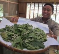 Silk is a huge industry in Cambodia. At a silk farm we learn all about how it is made