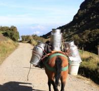 Cycle touring rural Colombia... and the local milk truck