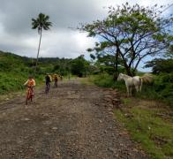 Biking in Fiji. If you take the wrong line you could end up in the horses arse