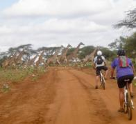 Sometimes we get caught in heavy traffic Even cycling on the quiet back roads of Kenya