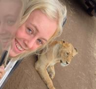 Just lion around in Tanzania