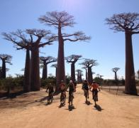 Cruising the Avenue de Baobab on our Madagascar cycle tour