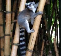 Cycle Tour in Madagascar with Escape Adventures