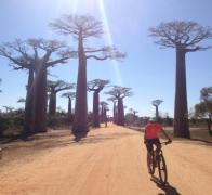 Cycling down the Avenues de Baobab