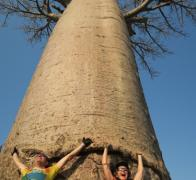Tony and Jude ride bikes and shade under this great baobab